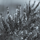 2013-12-26-wintergray-1