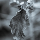 2013-12-26-wintergray-6